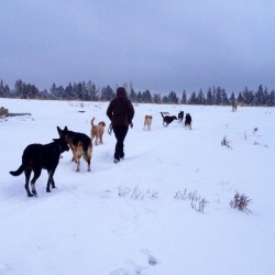 Walking in snow with pups
