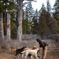 Inez Good Dogs