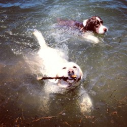 Dogs swimming at Moon Dog Lodge
